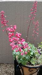 一昨年から、植木鉢に花の回りにアクセントに植えていたのです。 今年は、アクセントどころか主役です。 そのかわりパンジーは、いまいち。 ビオラはぼうぼうに繁って花が咲いてます。 何だかいつもの春より、暑苦しい感じです。 少し早く気温が上がってるのでしょうか。 花は素敵なので、罪は無いのですが。 雨上がりの庭で思ったしだいです。