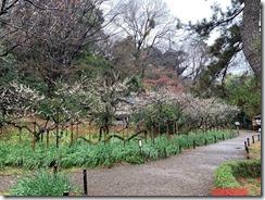 ④-1庭園の維持